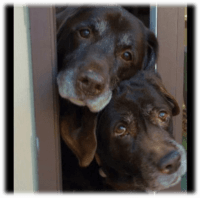 dogs looking out door waiting for dog walker