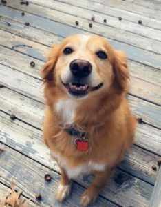 This image has an empty alt attribute; its file name is dog-smiling-back-at-you-234x300.jpg