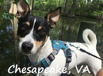 dog walking around oak grove park in Chesapeake, Virginia