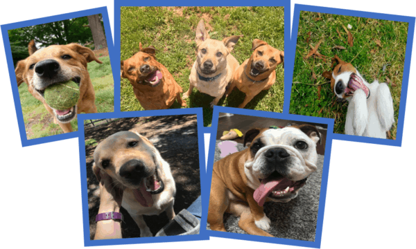 lots of happy dogs smiling at the pet sitters camera