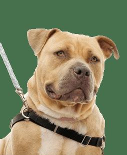 dog walking portsmouth va